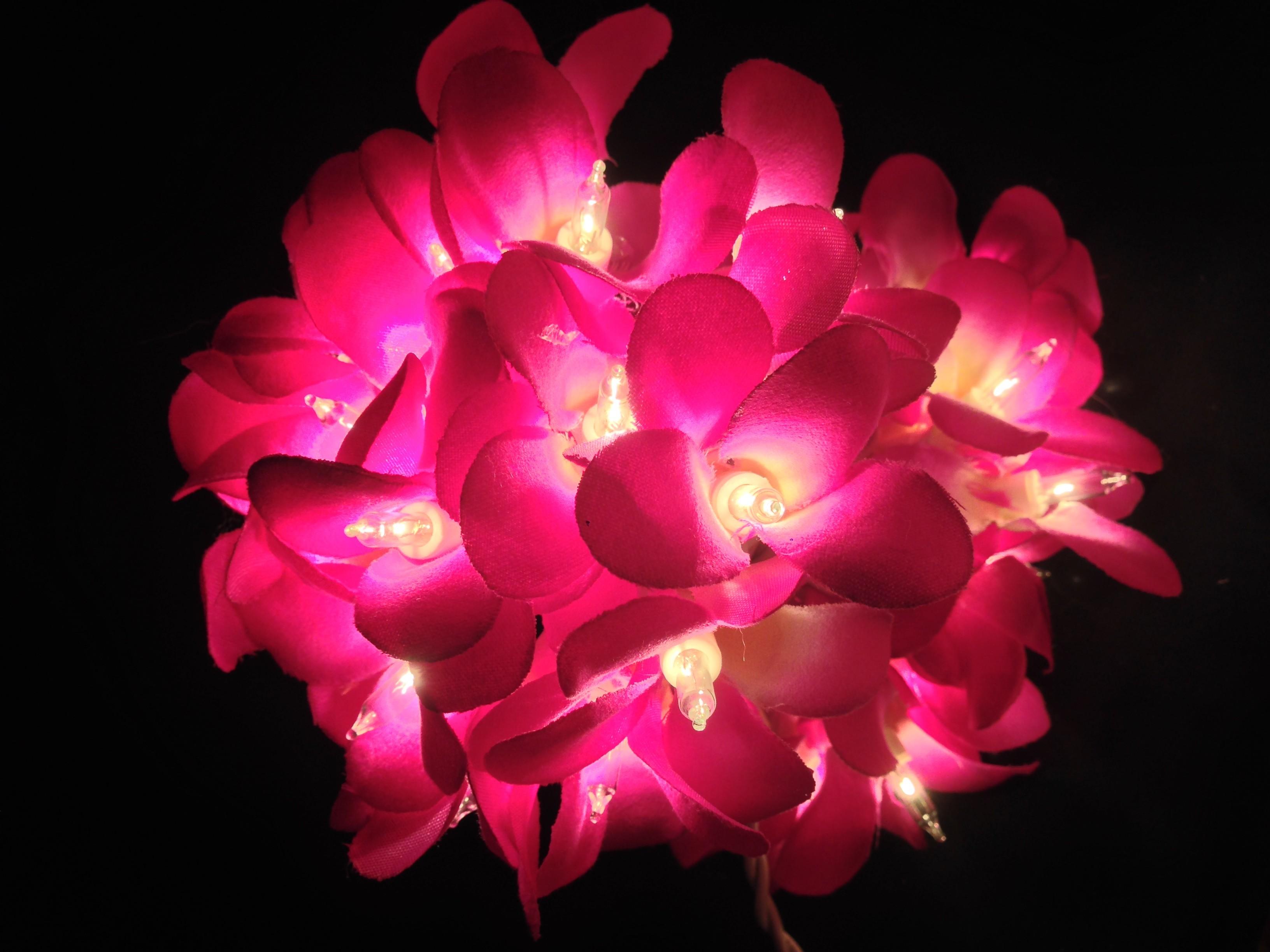Frangi Orchidée